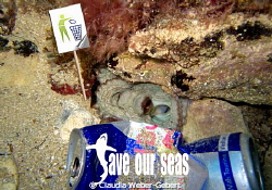 no pollution - save our seas by Claudia Weber-Gebert 